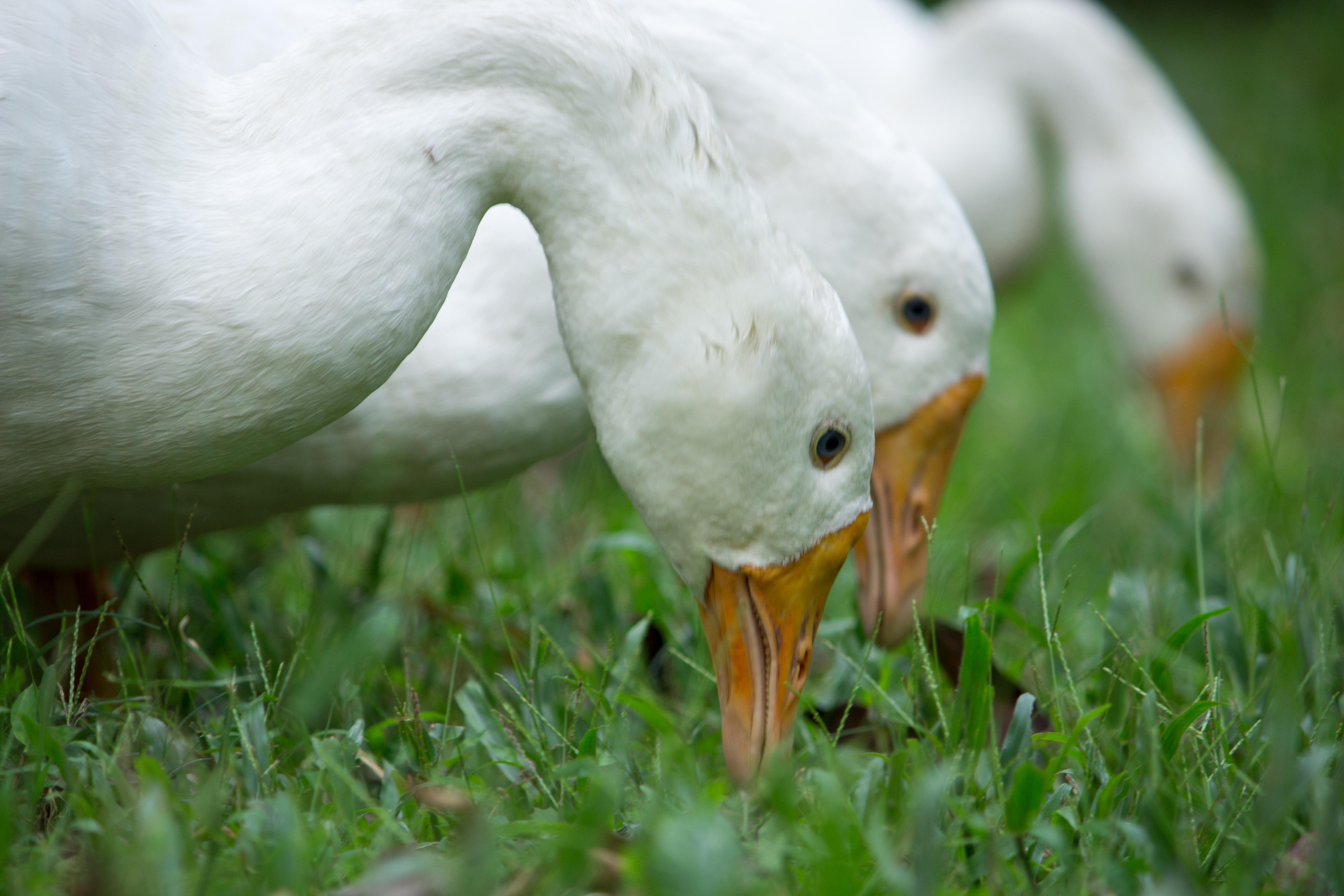 animal-beak-biology-594111.jpg