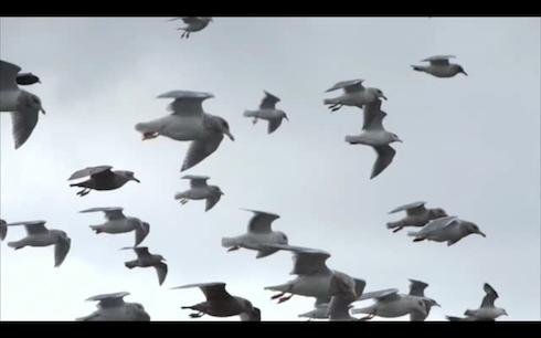 Screen Shot 2012-10-07 at 11.01.39 AM.png