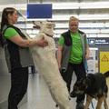 Koronavírus felismerő kutyusok a reptéren