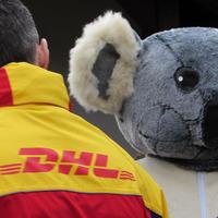 DHL Express, a budapesti koalák légi eukaliptusz szállítója