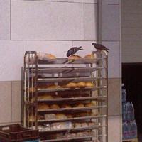 A Spar eteti a galambokat!