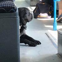 Egyeseknek kell a szájkosár a BKV buszán