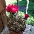 Mai kreatív: barkács kaktuszvirág a Praktikertől