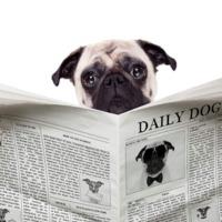 Hanyas számtól kezdődik és meddig tart egy évfolyamnyi újság?