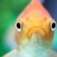 Állatkínzó akváriumot árulnak az állatbarát kereskedők
