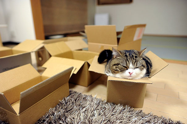 funny-cats-if-it-fits-i-sits-11.jpg