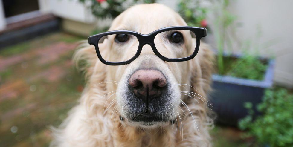 kutyaokos.jpg