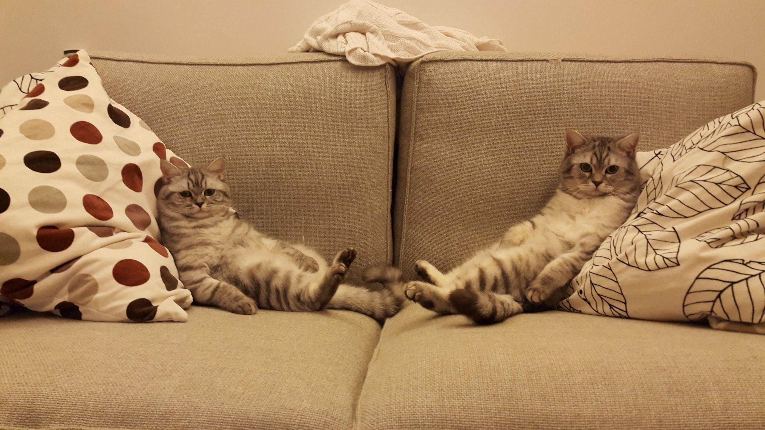 macskakanape.jpg