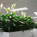 10 dekoratív növény, ami feldobja az irodát