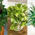 6 szobanövény, ami (majdnem) bármit túlél