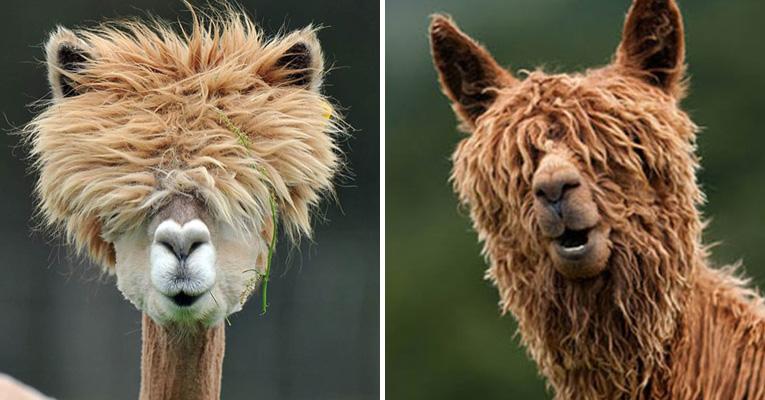 alpaca-hair.jpg