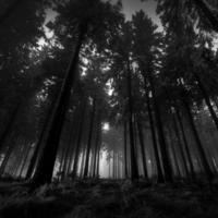 A Tekergős erdő legendája