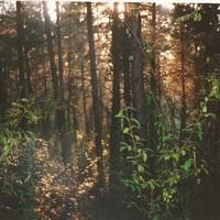 Oltár a fák közt