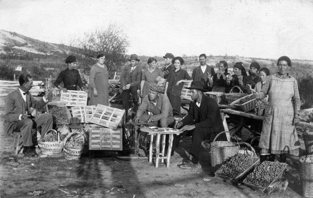 Kint a szőlőben folyik csak igazán a munka... (1929). Forrás: Fortepan (58262,Jurányi Attila)