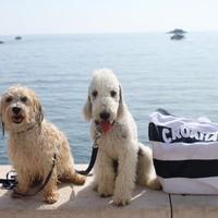 Kutyás strandok Horvátországban