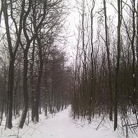 Gyere ki a hóra!