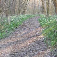 Legalább 15,28 km az ártéri erdő ösvényein