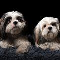 Miért ne vegyél a Jófogáson kutyát?  1.rész