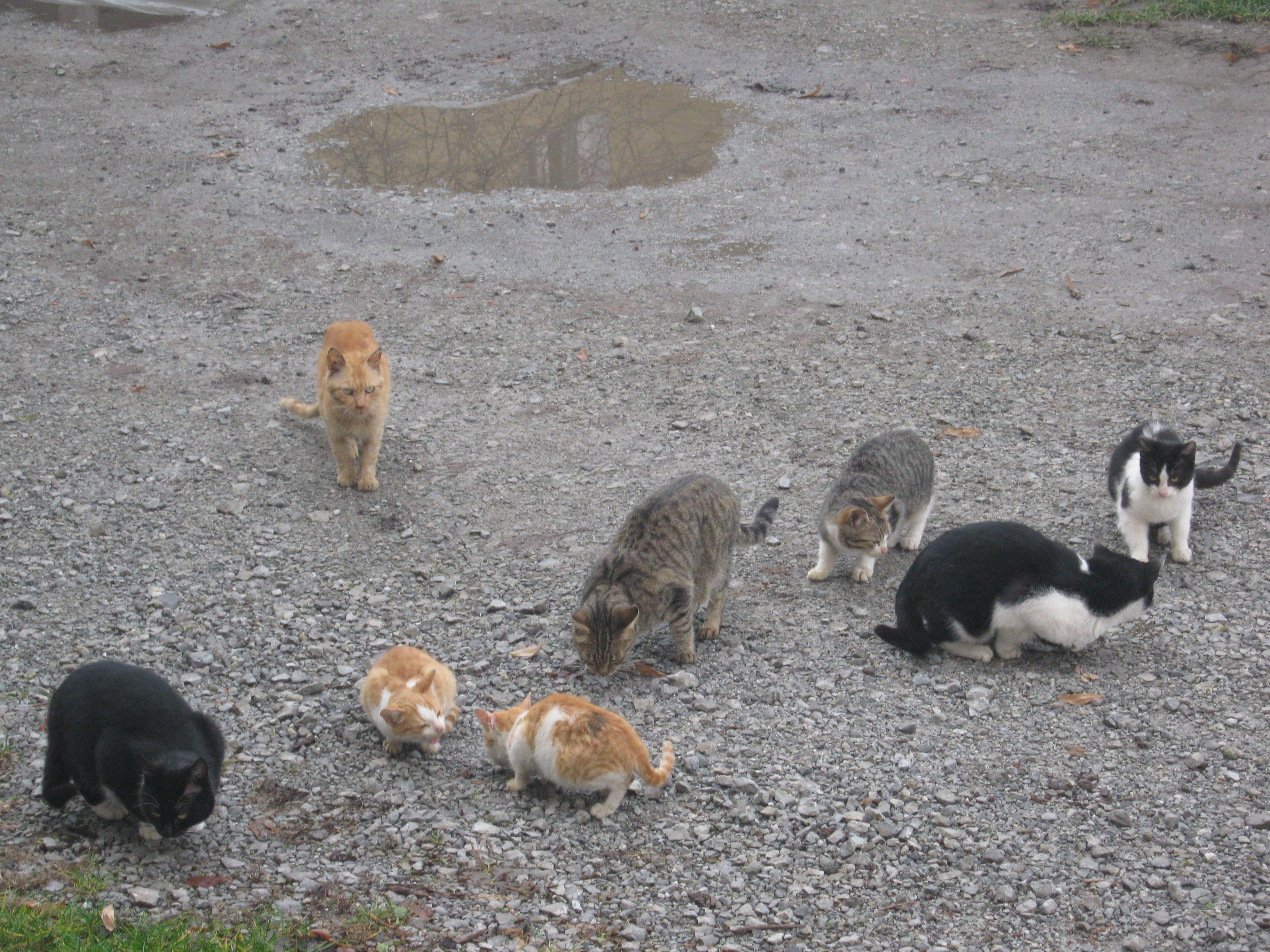 herd_of_cats.jpg