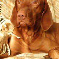 Tanulni kutyául - Jan Fennell : Kutyapszichológia