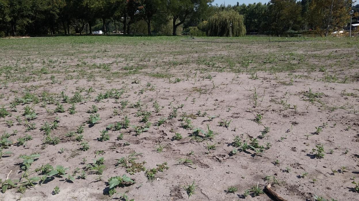 Itt majd 4 hete növekednie kéne a fűnek.