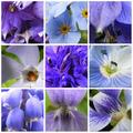 A természet színei: kék, rószaszín, lila