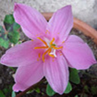 Mai virágözön