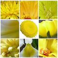 A természet színei: sárga és rózsaszín