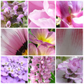 A természet színei: rózsaszín, fehér