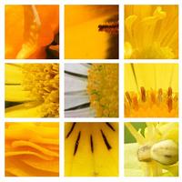 A természet színei: sárga