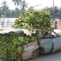 Banános Joe