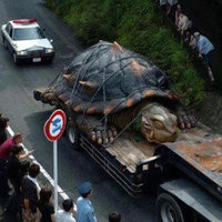 A világ legnagyobb óriásteknőse