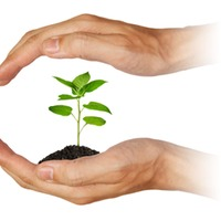 A homeopátiás növényvédelem
