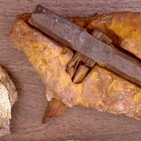 Az 500 millió éves kalapács rejtélye