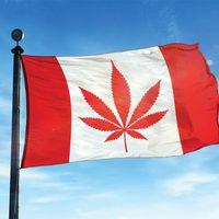 Röviden: Elütés miatt legalizálták a kannibalizmust Kanadában?