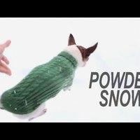 Fellebbentette a fátylat a havas-csivavás videó készítője
