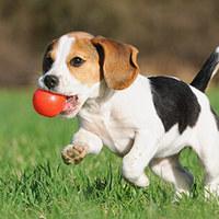 Futótűzként terjed a kutyamérgezés (ál)híre