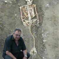 Sellő csontvázat találtak?