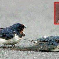 Meghalhat-e egy madár egy eldobott rágógumitól?