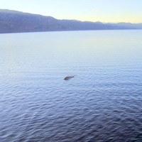 Hamis a tavaly augusztusi Nessie fotó
