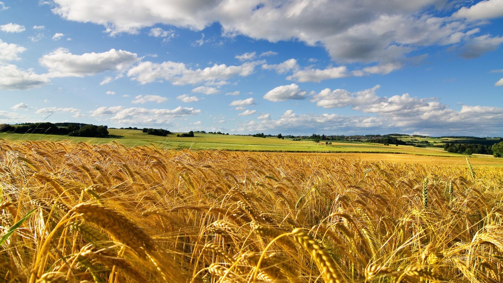 cornfield-summer-1920x1080.jpg