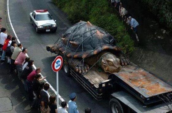 largest-turtle.jpg