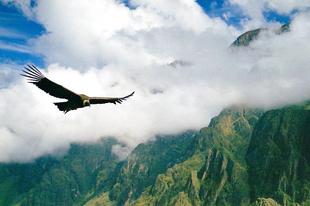 Kondorként lebegni az Andok felett, emberi dolog