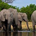 580. Még az elefántokról