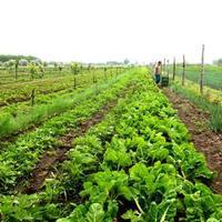 A biogazda legeltet, nem használ műtrágyát és nem pazarol