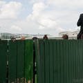 Budapesti majális - Nagy futam