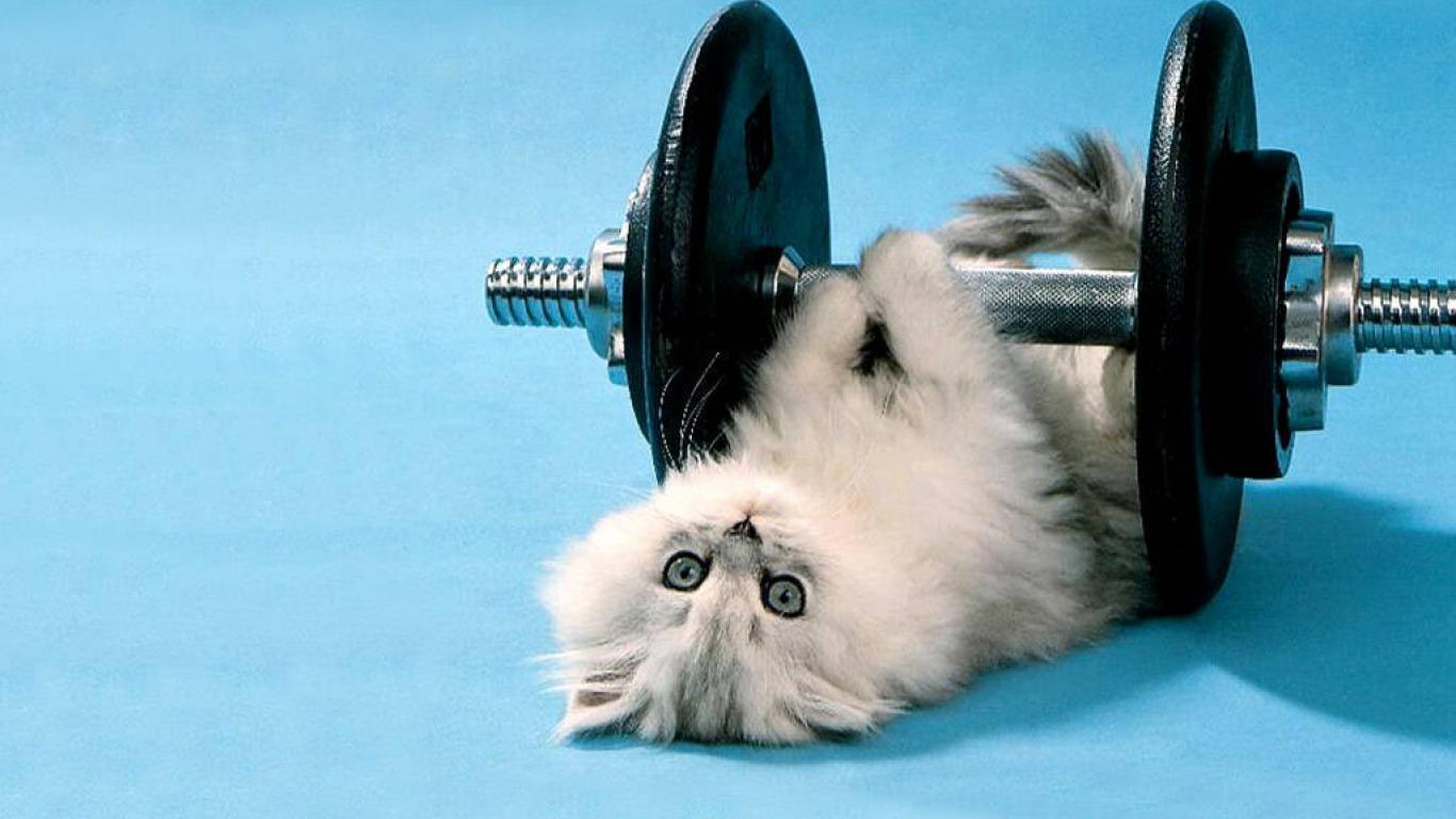 cat_sport_forras.jpg
