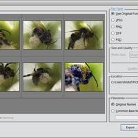 Photoshop Elements 11: Képek exportálása