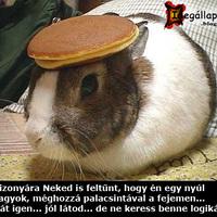 Palis nyuszi :)