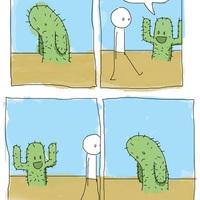 Magányos kaktusz